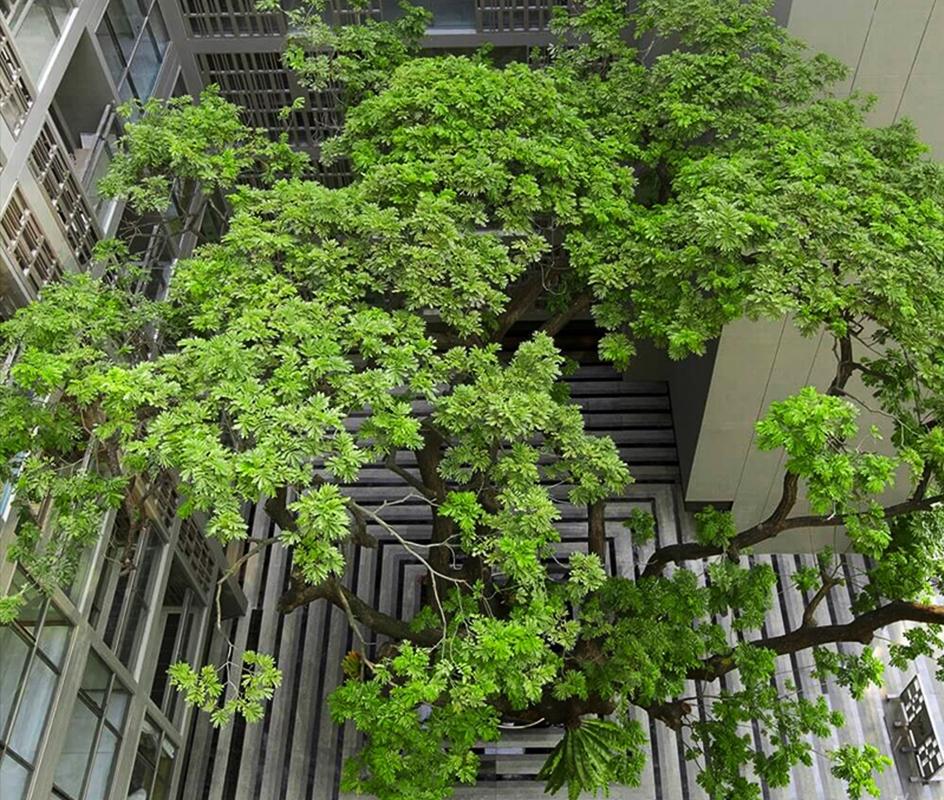 เก็บ เลือก ปลูก รักษา วิธีรักษาธรรมชาติรอบตัวโครงการของแสนสิริ – Green Mission - Sansiri Backyard