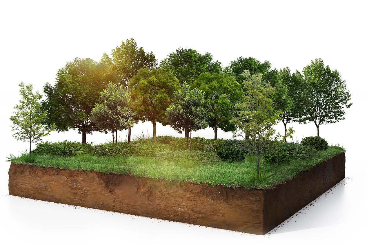 สร้างสวนหลังบ้าน ให้กลายเป็นพื้นที่สีเขียวแห่งการเรียนรู้ - Green Mission - Sansiri Backyard