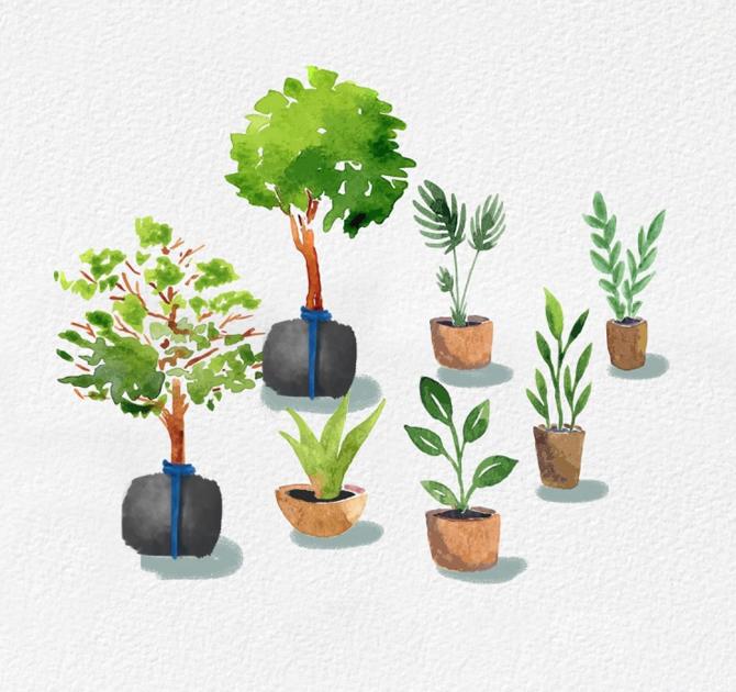 แสนสิริเข้าใจคุณค่าของธรรมชาติ และให้ความสำคัญกับต้นไม้ตลอด 35 ปี - Green Mission - Tree Story